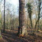 Umarme einen Baum